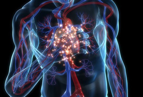 Glowing heart animation with the cardiovascular system.